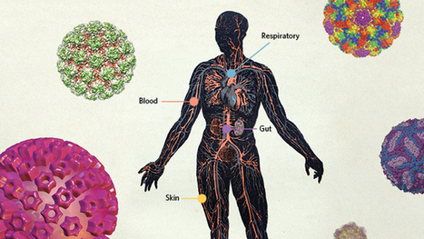 The Human Virome  | Viruses and Bioinformatics from Virology.uvic.ca | Scoop.it