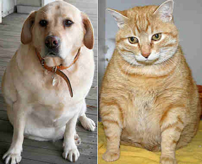 Don't Show Your Love By Overfeeding Your Pet | beauty-lover | Scoop.it