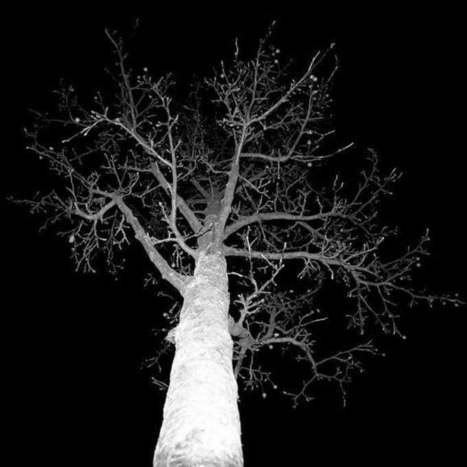 Photographing Trees From Below #art #photography #trees #nature #environment   Luby Art   Scoop.it