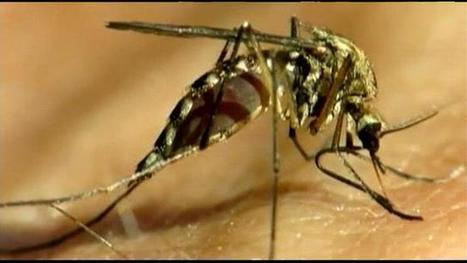 Upstate doctors and pest control companies give Zika tips | Pest Inspection and Treatment in NC | Scoop.it