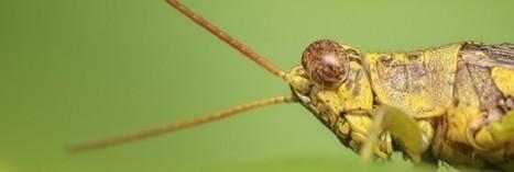 Ces insectes qu'on mange sans le savoir | Toxique, soyons vigilant ! | Scoop.it