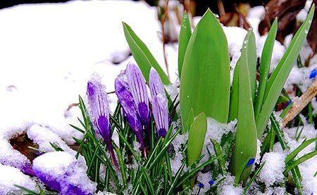 Frühlingsbilder | kostenlose-Bilder | Scoop.it