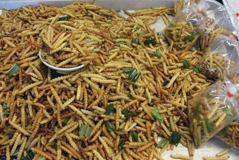 How Entrepreneurs Are Helping American Consumers to Accept 'Bug Food' - PSFK | Entomophagy: Edible Insects and the Future of Food | Scoop.it