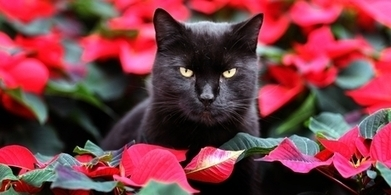 Mystery of moggy's origins solved - New Zealand Herald   ecoiko nature environment   Scoop.it
