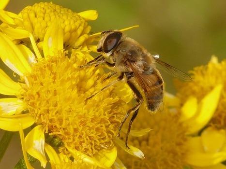 Base de données des espèces mellifères INTERAPI   AGRONOMIE VEGETAL   Scoop.it
