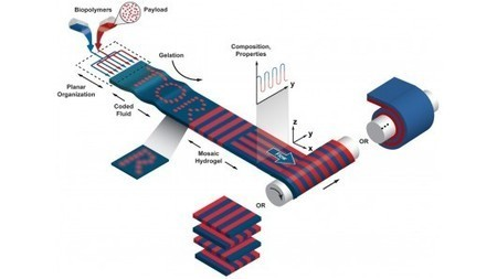Microfluidic device designed for large-scale tissue engineering | Longevity science | Scoop.it