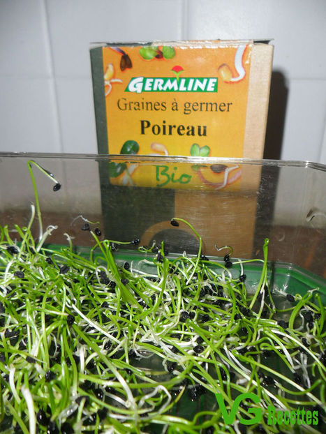 Graines Germées de Poireau | alimentation vivante | Scoop.it