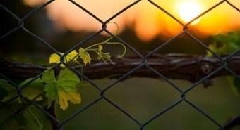Non-Profits Use Vine for Good | Nonprofits & Social Media | Scoop.it