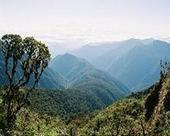 Tree roots in the mountains 'acted like a thermostat' for millions of years | Sustain Our Earth | Scoop.it