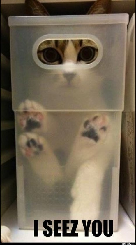 ROFLCAT - Funny Cat Pictures, Lolcats, Cute Cats | cats & dogs! | Scoop.it