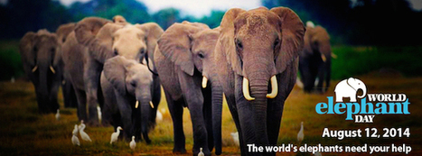 Celebrate World Elephant Day With 5 Great Organizations Working to Save Them | Care2 Causes | GarryRogers NatCon News | Scoop.it