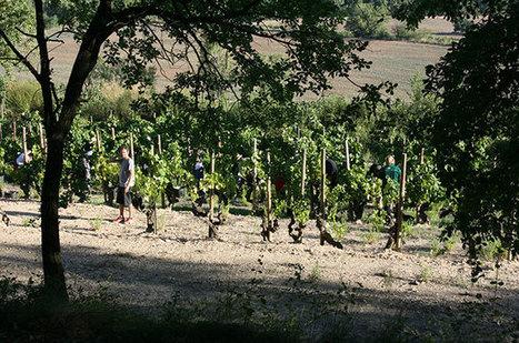 Anson on Thursday: White hot Spanish winemakers | Vitabella Wine Daily Gossip | Scoop.it