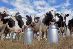 Les pays en développement pénalisés par les subventions laitières de l'UE - LeMonde.fr | Union Européenne, une construction dans la tourmente | Scoop.it