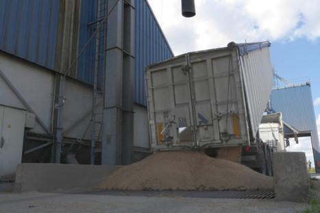 Le blé de Haute-Normandie doit-il se faire du mauvais grain ? | 76Actu.fr | Actu Boulangerie Patisserie Restauration Traiteur | Scoop.it