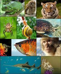 Branches of Zoology | Tut2Learn Blog | Zoology and Everything Animals | Scoop.it