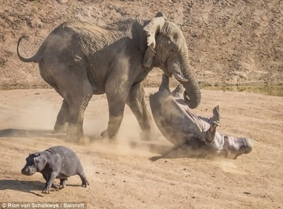 Come The Revolution ELEPHANTS Beat HIPPOS - Which One Are You? | Startup Revolution | Scoop.it