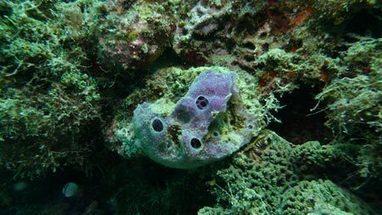 New sponge species discovered on Taiwan's coral reefs - WantChinaTimes | Amocean OceanScoops | Scoop.it