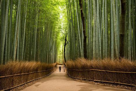 15+ Reasons Why You Should #Visit #Japan | What makes Japan unique | Scoop.it