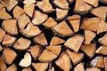 Tráfico ilegal de árboles | EROSKI CONSUMER | Recursos de Botánica para Secundaria | Scoop.it