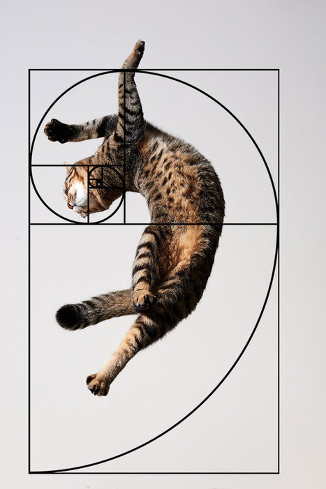 Furbonacci Sequence Proves That Cats Are Purrfect (10+ Pics) | Food for Pets | Scoop.it