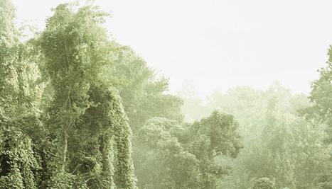 Cette plante verte qui envahit les États-Unis - National Geographic | Les envahisseurs | Scoop.it