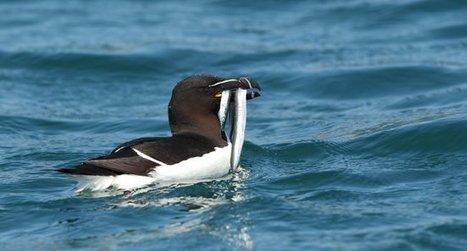 Mobilisons-nous pour le maintien de l'équilibre fragile du milieu marin - Actualités - LPO   Ces animaux sauvages ou domestiques maltraités par l'homme   Scoop.it