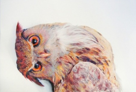 Colored Owl Drawings by John Pusateri | Place Holder Title | Scoop.it