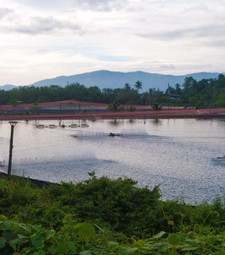 Marine products company sees Thai shrimp production 'crashing' as ... | EMS disease | Scoop.it