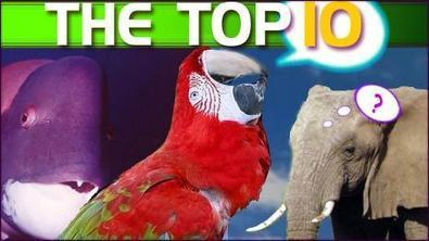 10 Amazing Things You Didn't Know about Animals | Weirdest Animal Behaviors | Scoop.it