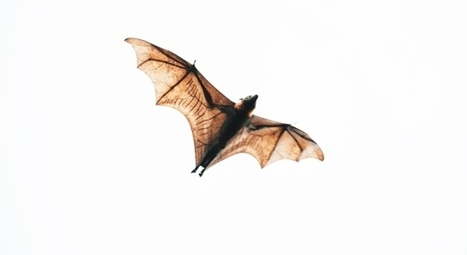 The invisible extinction - Nature.com | Bat Biology and Ecology | Scoop.it