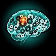 Neuroeducación: 25 hallazgos en 25 años | educacion-y-ntic | Scoop.it