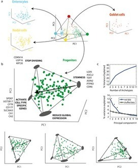 Geometry of the Gene Expression Space of Individual Cells | Viral Modeling and Simulation | Scoop.it