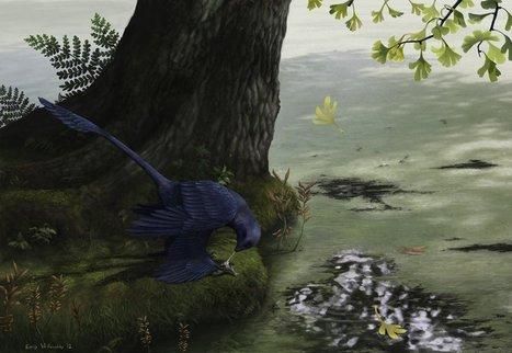 Les microraptors, ces dinosaures pêcheurs à quatre ailes   Aux origines   Scoop.it