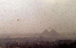 Locusts attack agricultural lands in Egypt's Suez governorate | Égypt-actus | Scoop.it