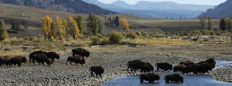 Yellowstone National Park | Business | Scoop.it