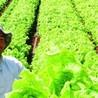 Nuevos modelos alimentarios y agropecuarios