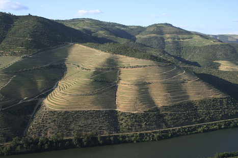 Quinta da Romaneira | The Douro Index | Scoop.it