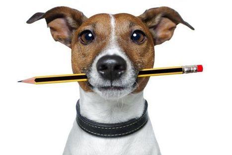Cómo captar autores externos para tu blog | Cursos de Publicidad y Marketing Online | social media marketing | Scoop.it