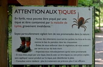 Faut-il avoir peur cet été de la maladie de Lyme ? | Alsace Actu | Scoop.it