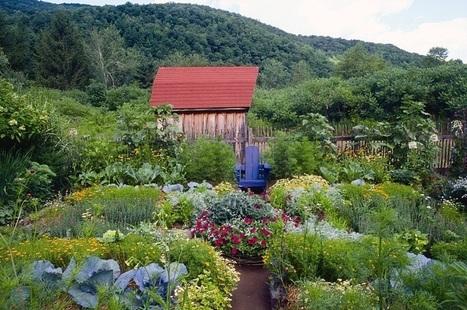 Десет најбољих удруживања биљака | Гајење биља на природан начин | Scoop.it
