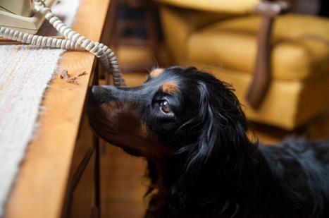 Un museau à la chasse des punaises de lit | animaux | Scoop.it