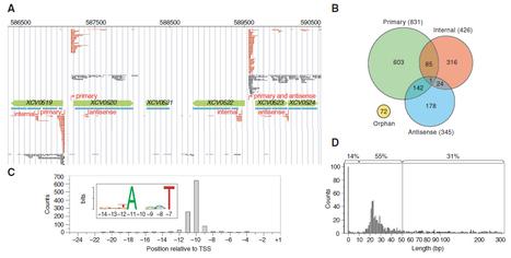 Genome-wide transcriptome analysis of the plant pathogen Xanthomonas identifies sRNAs with putative virulence functions | Plants&Microbes | Plant Genomics | Scoop.it
