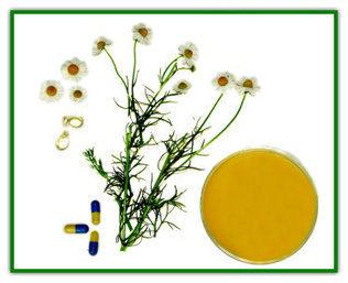manzanilla.jpg (372x303 pixels) | LA MANZANILLA UNA MARAVILLA.(Matricaria chamomilla L. ) | Scoop.it