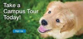 Xiglute | Xiglut - Blog View - Techniques of dog training salt lake city | dog grooming utah | Scoop.it