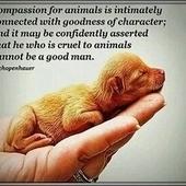 Reliant Stadium Houston Texas: STOP RODEO ANIMAL ABUSE   animals   Scoop.it