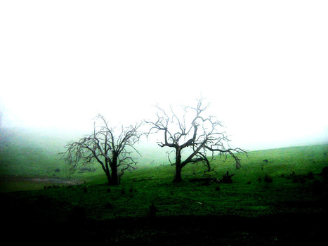 Foggy Trees | Landscapes of the world | Scoop.it
