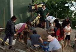 Permaculture in the Heart of Brisbane, Australia » Project worker ... | Permaculture News | Scoop.it