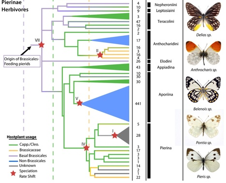 PNAS: The butterfly plant arms-race escalated by gene and genome duplications (2015) | Emerging Research in Plant Cell Biology | Scoop.it