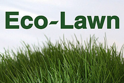 Eco-Lawn, ecolawn, lawn grass, grass seed, fescue grass, shade grass, great lawn, greener grass lawn seed, new lawn, organic lawn, turf grass, turf seed, drought resistant grass, green lawn, natura...   Annie Haven   Haven Brand   Scoop.it