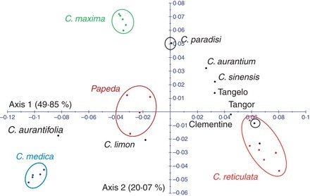 A nuclear phylogenetic analysis: SNPs, indels and SSRs deliver new insights into the relationships in the 'true citrus fruit trees' group (Citrinae, Rutaceae) and the origin of cultivated species | Archaeobotany and Domestication | Scoop.it